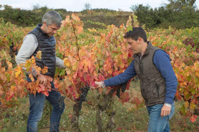Bodegas Gómez Cruzado completa su nueva gama de vinos con Montes Obarenes, un blanco de 'terroir'