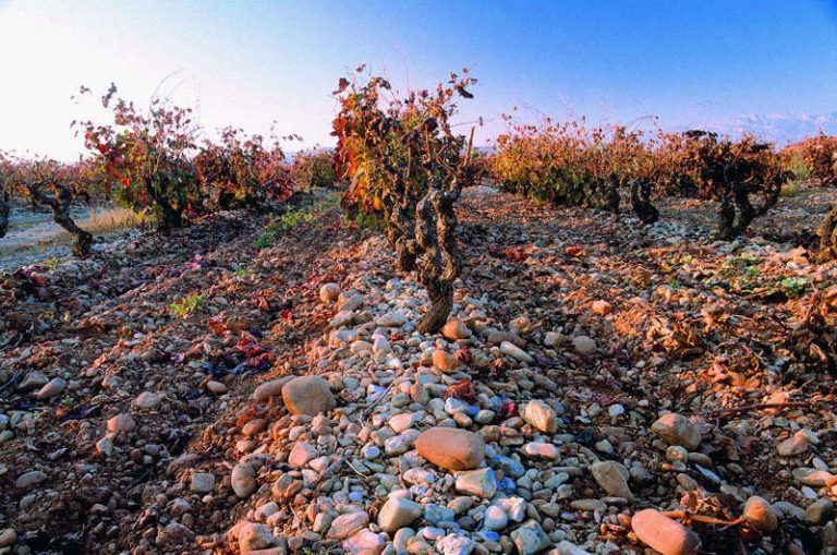 Sobre los vinos de pueblo, de zona y de viñedos singulares en la Denominación de Origen Calificada Rioja