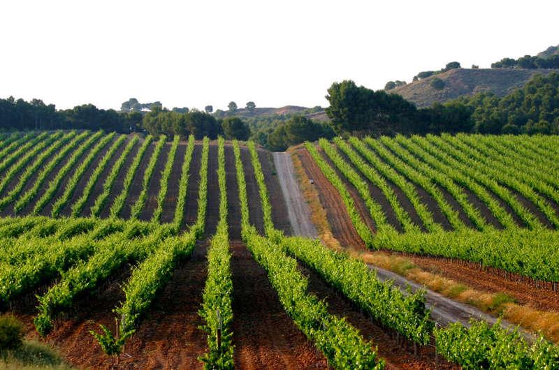 ¿El fin de La Rioja Baja?