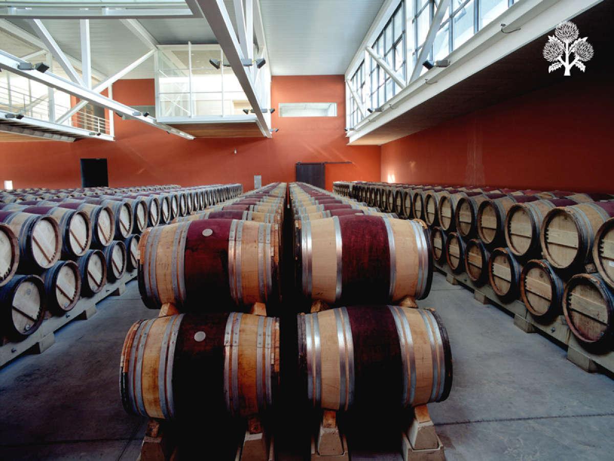 Bodegas Roda, sala de fermentación maloláctica