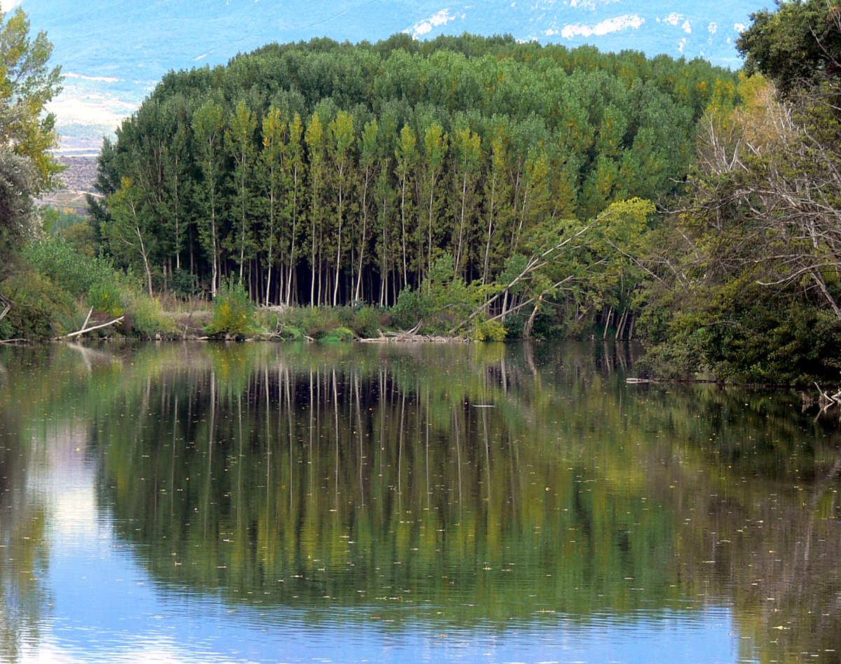 Cenicero, río Ebro. © Carlos Sieiro del Nido