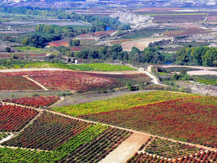 Paisaje de viñedos desde el castillo de Davalillo. © Carlos Sieiro del Nido