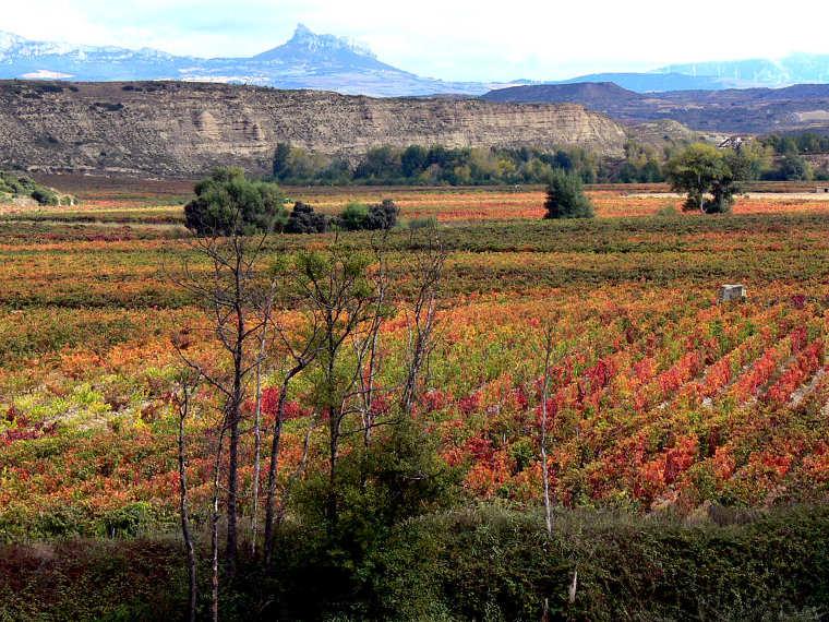 Viñedos en otoño, Cenicero (Rioja Alta). © Carlos Sieiro del Nido.