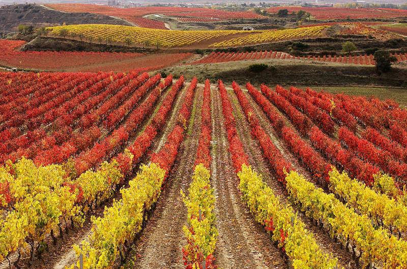 Paisajes de viñedos en la DOC Rioja: carreteras entre viñedos