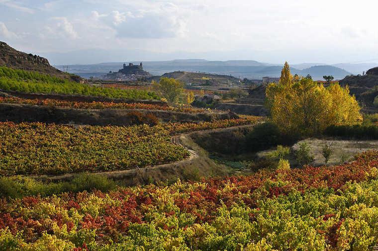 Viñedos en otoño, San Vicente de la Sonsierra (Rioja Alta). © Rafael López-Monné